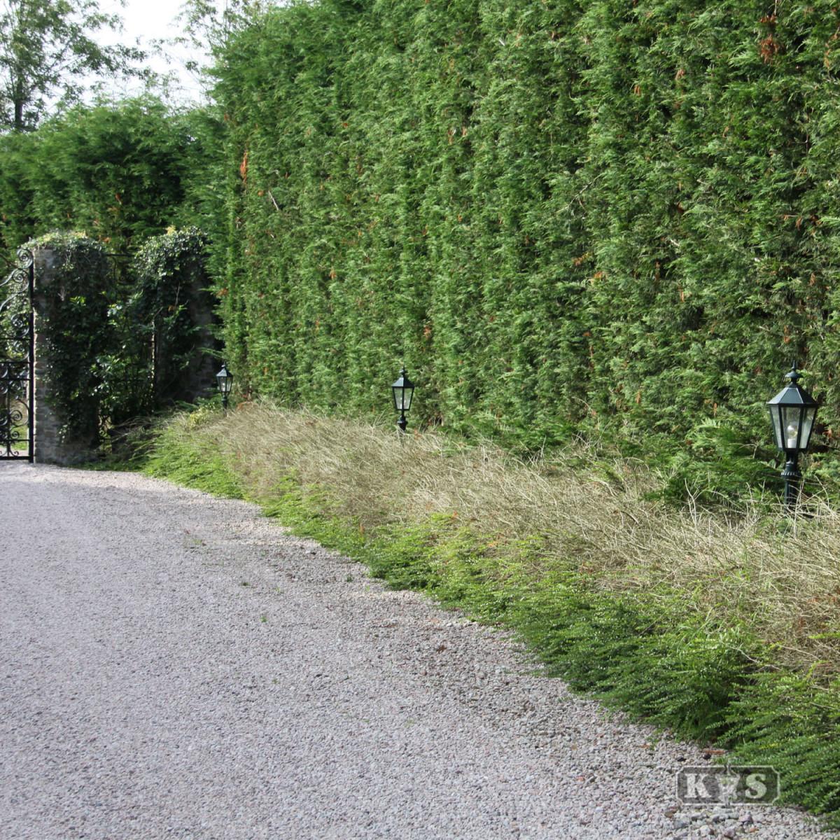 Klassische Gartenlaterne Koblenz